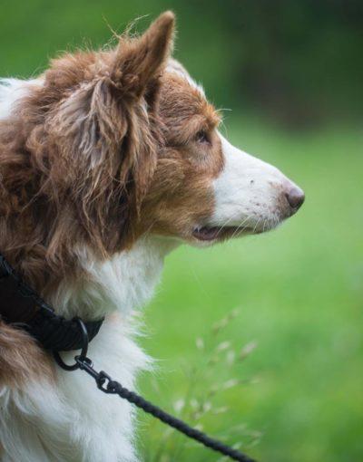 Černé vodítko s kovovou karabinou pro psa